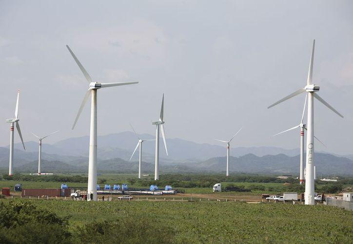 Las tres empresas son son Energía Renovable de la Península, Envision Energy International y Sunpower. (Milenio Novedades)
