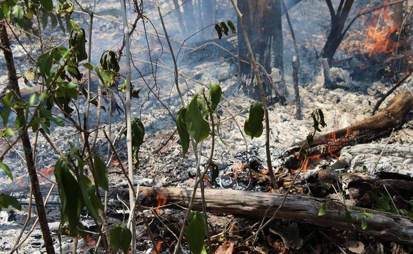 La quema de pastizales hace que proliferen los focos de incendio, principalmente en la ribera. (Carlos Castillo/SIPSE)