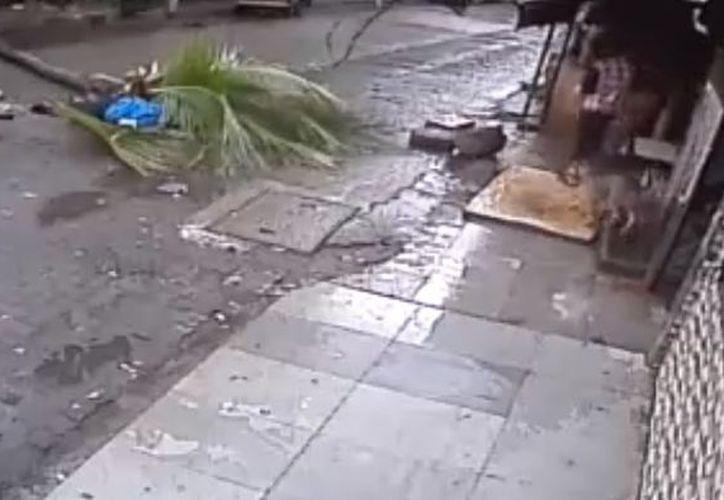 Autoridades la India indicaron que la caída de la palmera se debió a las fuertes lluvias. (Publimetro)
