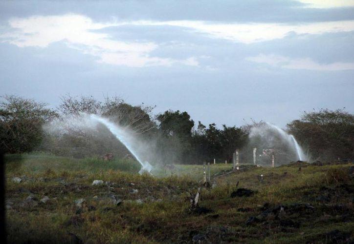 Yucatán creó el año pasado la primera Reserva Hidrológica del país. (Milenio Novedades)