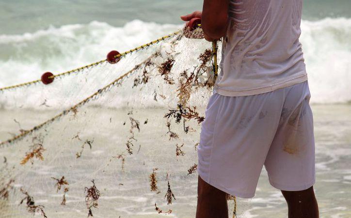 La red por arrastre tiene antecedentes de destrucción de especies marinas. (Octavio Martínez/SIPSE)