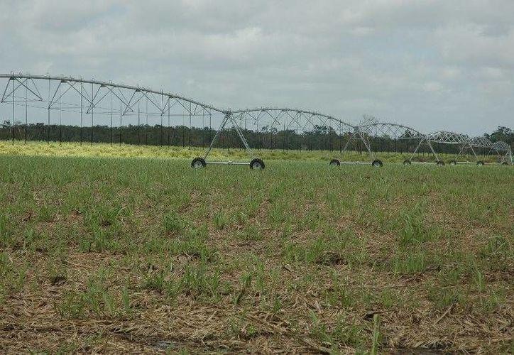 Cerca de cuatro mil hectáreas de riego se encuentran inoperantes por el robo de la infraestructura hidráulica. (Edgardo Rodríguez/SIPSE)