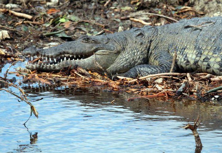En la zona existen especies incluidas en la norma oficial mexicana NOM-059. (Luis Soto/SIPSE)
