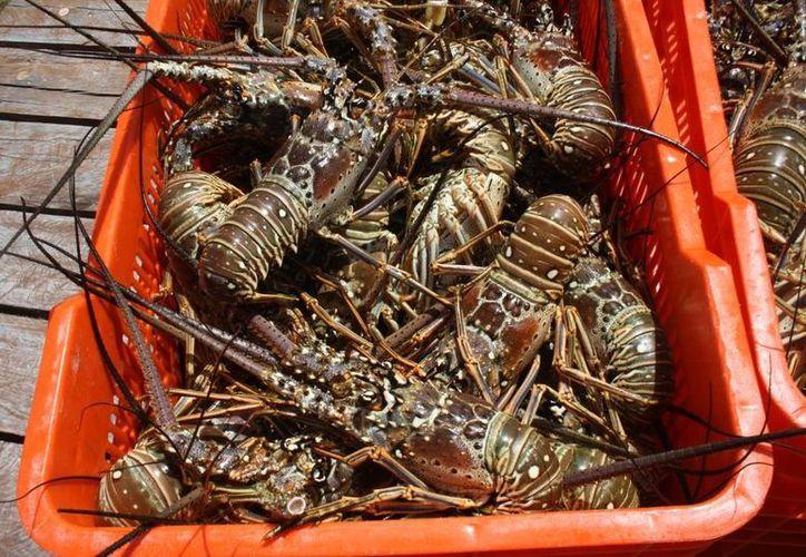 En esta ocasión los pescadores decidieron vender el producto a los hoteles y restaurantes locales. (Sara Cauich/SIPSE)