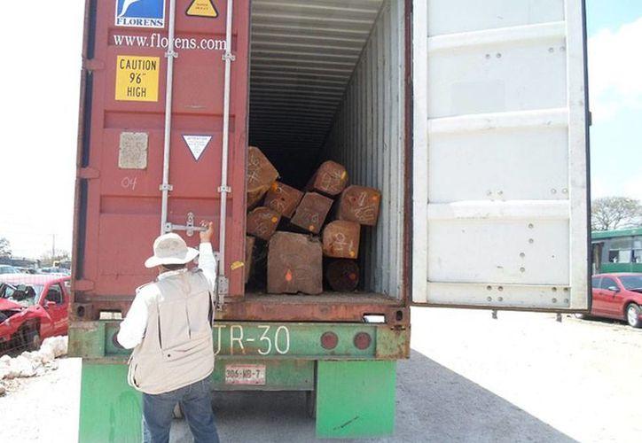 Decomisan madera ilegal en un tráiler; tenía como destino la República Popular de China. (Oficial)