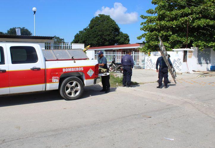 Bomberos retiraron todos los panales de avispas en la escuela Fernando figueroa. (Foto: Redacción /SIPSE)