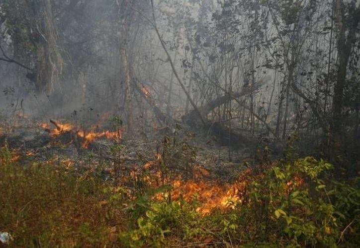 El uso del fuego para fines agrícolas ha sido controlado. (Archivo/SIPSE)