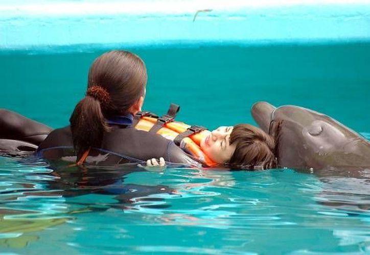 Las terapias con delfines garantizan múltiples beneficios a las personas con alguna discapacidad cognitiva. (www.diarioanimales.com)