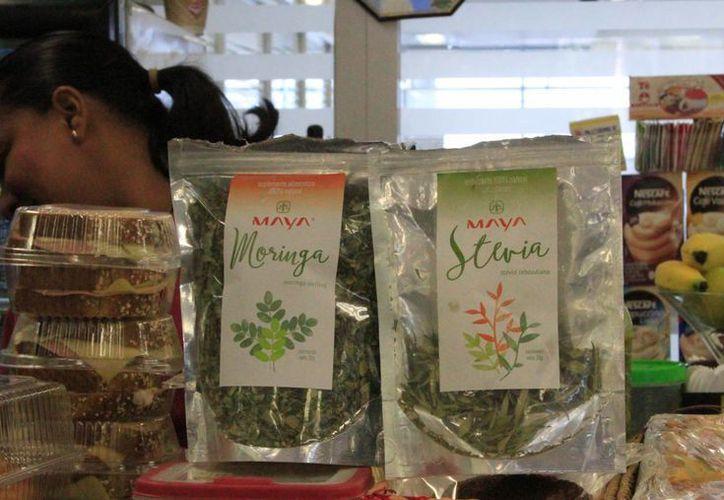 Stevia Maya tiene la capacidad de producir de 450 a 500 kilos por hectárea. (Ángel Castilla/SIPSE)