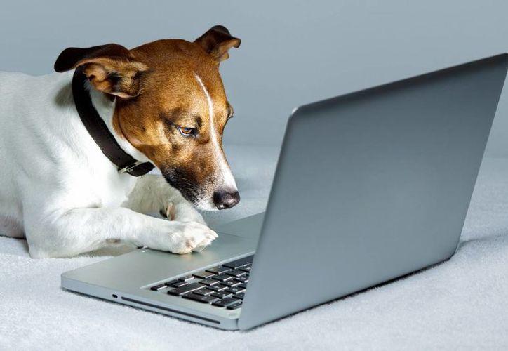 Según especialistas, a los perros les resulta muy extraño ver un rostro familiar en un espacio reducido como una pantalla. (judywalkervet.co.uk)
