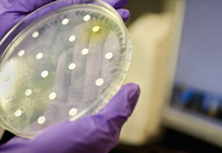 """La """"caza"""" de microorganismos se llevará a cabo a 8 mil metros de profundidad. (Agencias)"""