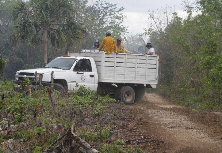 Los incendios forestales devastan las hectáreas arbustivas de Benito Juárez. (Victoria González/SIPSE)