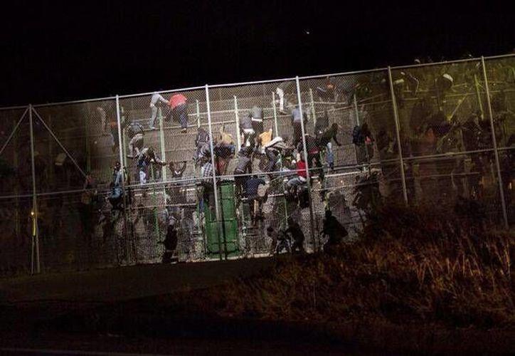 Centenares de inmigrantes se subieron a la valla y muchos de ellos fueron impedidos por las fuerzas de seguridad marroquíes y españolas. (twitter.com/kijajose)