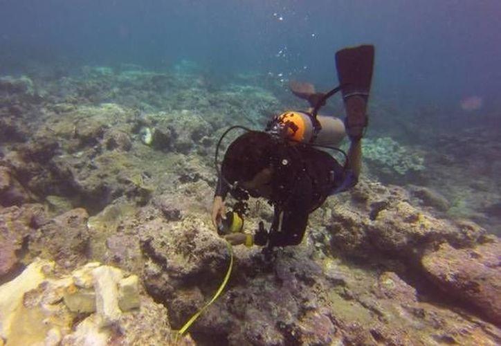 El deterioro se encuentra en una etapa aguda y es necesario que se implementen programas de manejo y conservación arrecifal. (SIPSE)