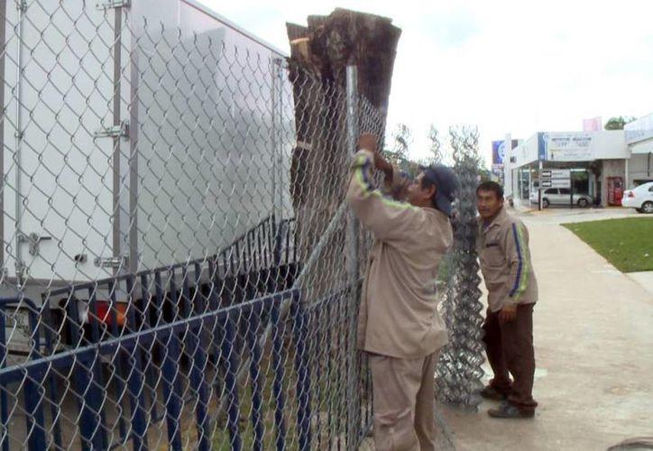 La agencia automotriz que cometió tala de árboles en la avenida Prolongación Montejo por la calle 25 deberá, de entrada, pagar una multa municipal que puede llegar a ser de un millón 700 mil pesos. (SIPSE)
