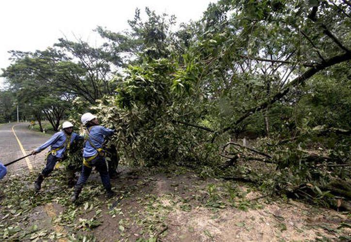 Empleados de la compañía de luz limpian una de las zonas afectadas por el huracán 'Otto' en Nicaragua. (AP/archivo)