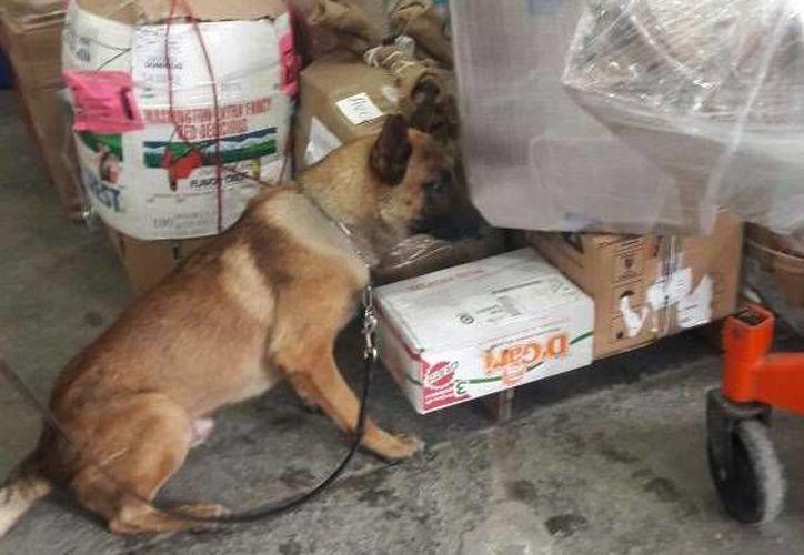 La caja y su contenido fue puesta a disposición del  agente del Ministerio Público Federal. (Redacción/SIPSE)