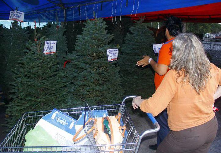 En una escuelas de primaria de Frisco, Texas, están prohibidos los árboles de Navidad, por lo que los estudiantes no podrán celebrar las fiestas. Imagen de contexto de la venta de pinos navideños, en Mérida, Yucatán. (Milenio Novedades)