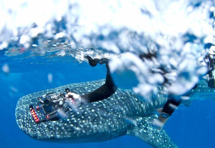 Gerardo del Villar encontró su pasión no solo en estar con tiburones, sino en tomarles fotos bajo el agua. (EFE)