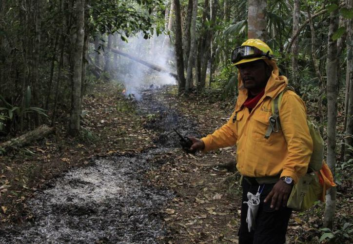 El objetivo de aplicar la línea negra es evitar que el fuego avance, ya que al encontrar una franja limpia,  el incendio se detiene. (Edgardo Rodríguez/SIPSE)
