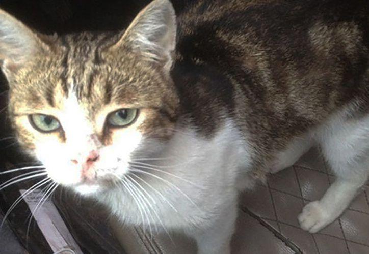 El felino vivió dentro de la cárcel anteriormente, pero uno de los internos se lo llevó consigo cuando salió en libertad. (RT)