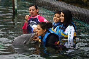 Celebra Dolphin Discovery al visitante cinco millones