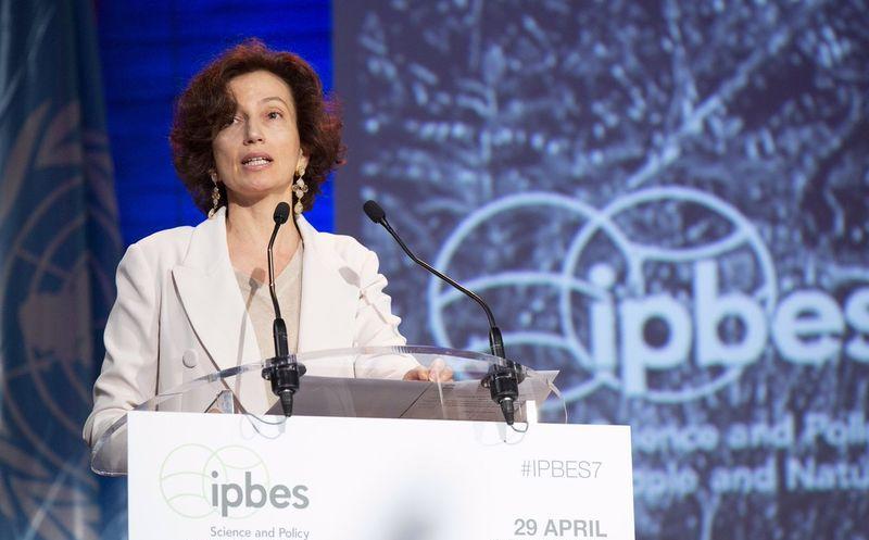Prensa libre, esencial para paz y justicia: ONU
