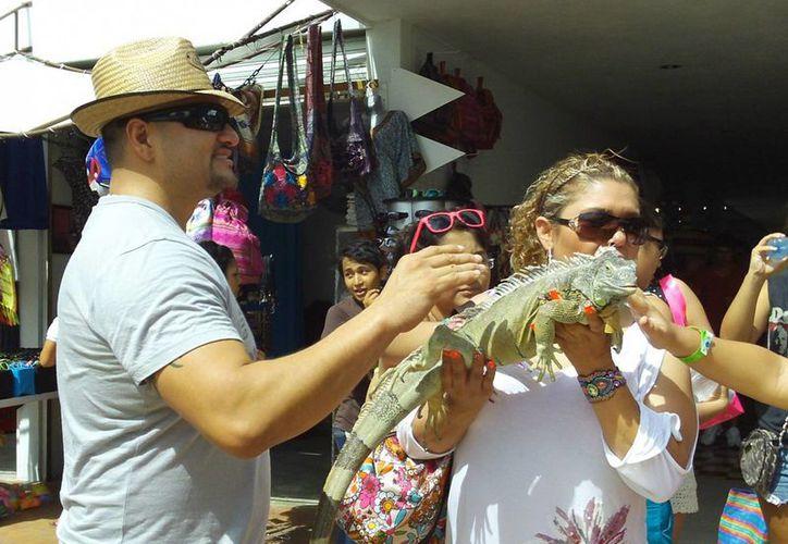 'Juanito', la iguana, le dio a ganar buenas propinas a su dueño. (Manuel Pool/SIPSE)