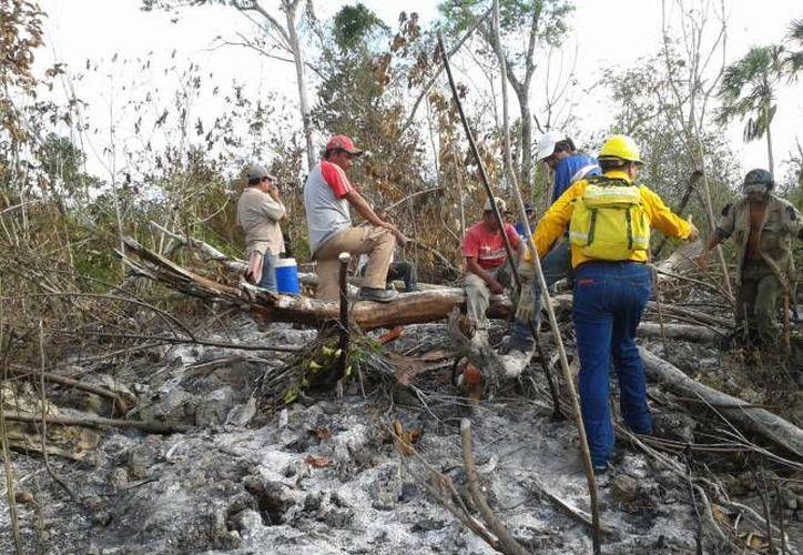 Elementos de la Conafor, Protección Civil y ejidatarios sofocan los dos incendios reportados recientemente en la zona norte. (Redacción/SIPSE)