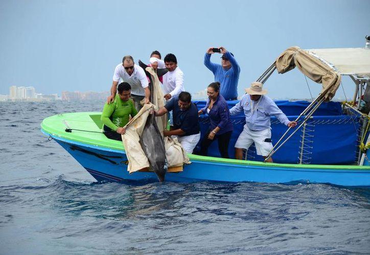 El delfín se recuperó físicamente, lo cual se comprobó mediante análisis clínicos, por lo que ya no cuenta con ningún tipo de enfermedad. (Redacción/SIPSE)