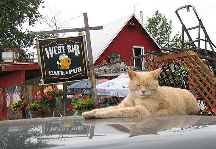 El famoso gato Stubbs que ejercía como alcalde en la ciudad de Talkeetna, murió. (Flickr.com / Jenni Konrad).