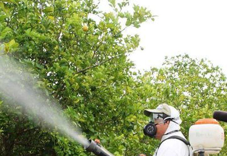 El equipo de aplicación está utilizando 30 fumigadoras y  trabajan 12 técnicos de campo, en 10 vehículos. (Edgardo Rodríguez/SIPSE)
