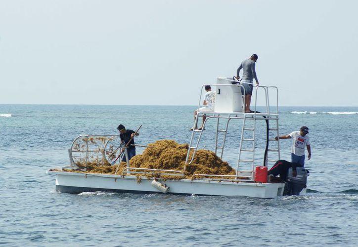 El catamarán de 50 pies, puede recolectar hasta una tonelada de sargazo. (Redacción)