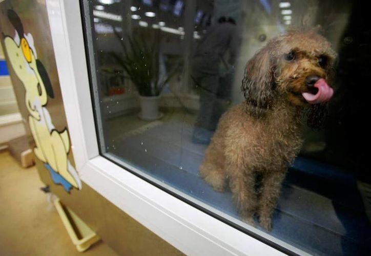 Las protectoras de animales indican que la proyecto contra la venta de perros y gatos lleva años siendo reclamada. (20minutos.es)