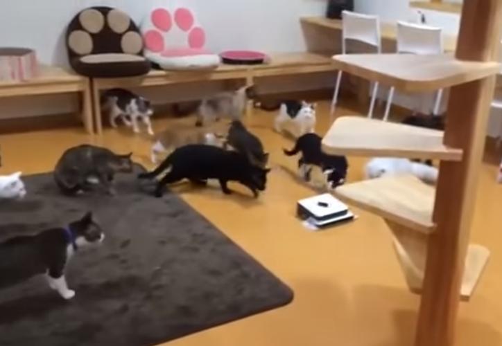 Los gatos son reconocidos por su curiosidad. (Captura de pantalla/YouTube)