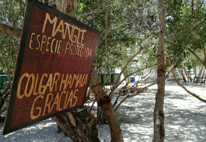 Promueven la protección de los recursos naturales en Punta Esmeralda.  (Octavio Martínez/SIPSE)