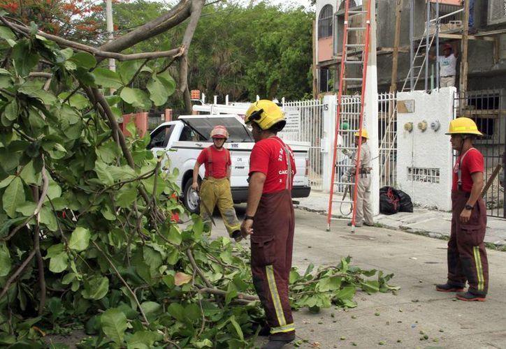 En temporada de huracanes, no hay una regla de poda. (Tomás Álvarez/SIPSE)