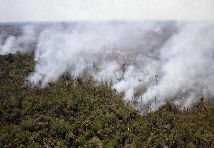 En Quintana Roo se han devastado 537.22 hectáreas de vegetación en lo que va del año. (Javier Ortiz/SIPSE)