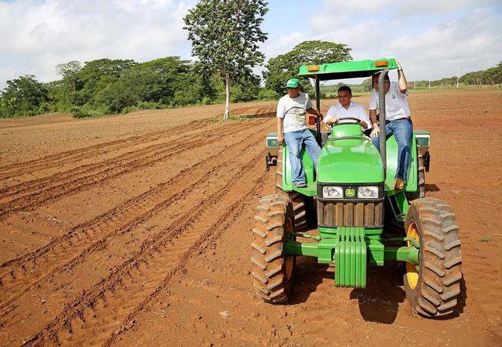 El gobernador Rolando Zapata Bello maneja un tractor en una unidad de producción en el Cono Sur de Yucatán. (SIPSE)