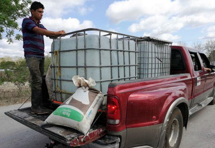 Los ganaderos tienen que transportar enormes bidones con agua hacia los ranchos para hidratar al hato. (Foto: Javier Ortiz / SIPSE)