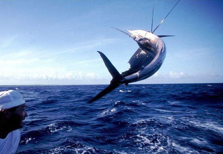 Quintana Roo tiene una de las mejores aguas para la pesca deportiva. (Raúl Caballero/SIPSE)