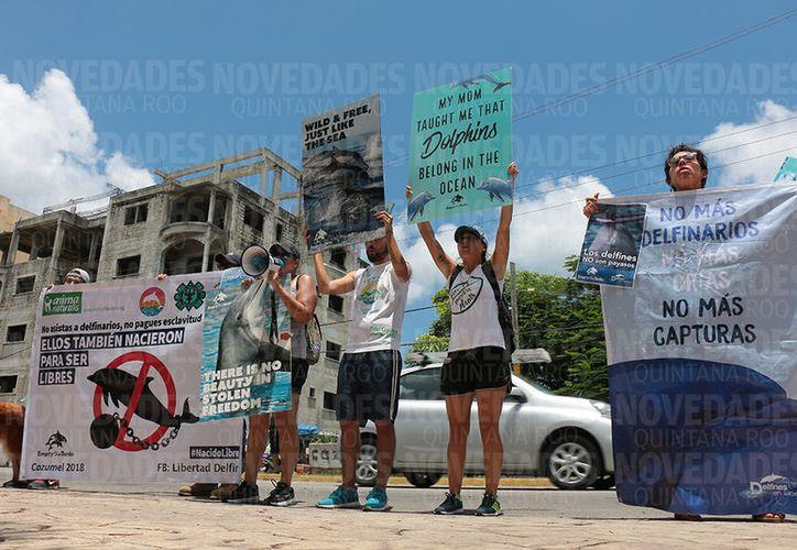 Las protestas comenzaron alrededor del medio día en tres diferentes puntos de la isla. (Gustavo Villegas/SIPSE)