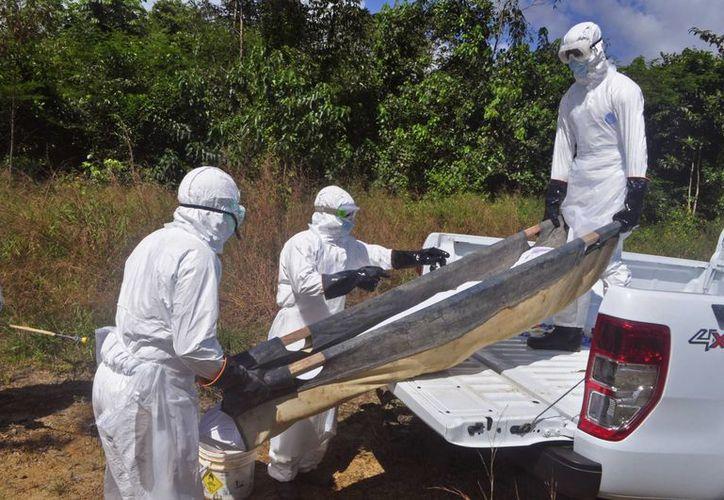 Trabajadores de salud cargan el cuerpo de una mujer que se presume murió de  ébola, en Monrovia, Liberia. La ONU emitió un manual sobre el manejo de los fallecidos por esta enfermedad. (Agencias)