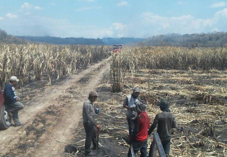 A más tardar el 20 de julio los productores deben firmar para que el Ingenio San Rafael de Pucté empiece con el depósito de pagos. (Joel Zamora/SIPSE)