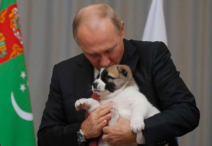 utin recibió como regalo un perro cachorro de raza alabay. (Reuters).