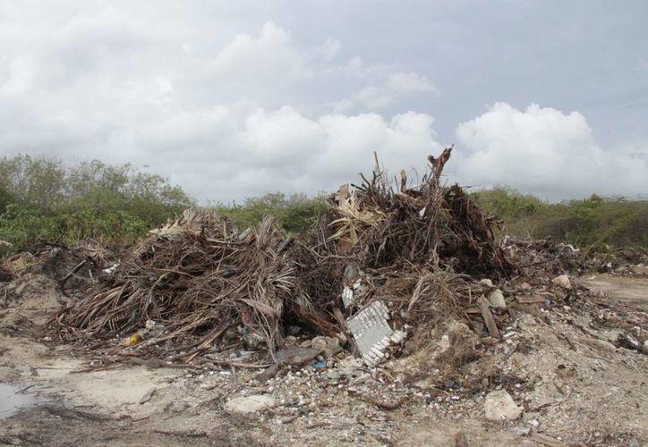 Se limpiarán dos de las cinco hectáreas que tiene el basurero. (Tomás Álvarez/SIPSE)