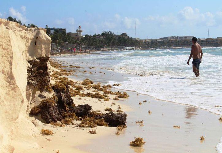 Se pueden observar restos de sargazo debido al deslave de arena. (Octavio Martínez/SIPSE)