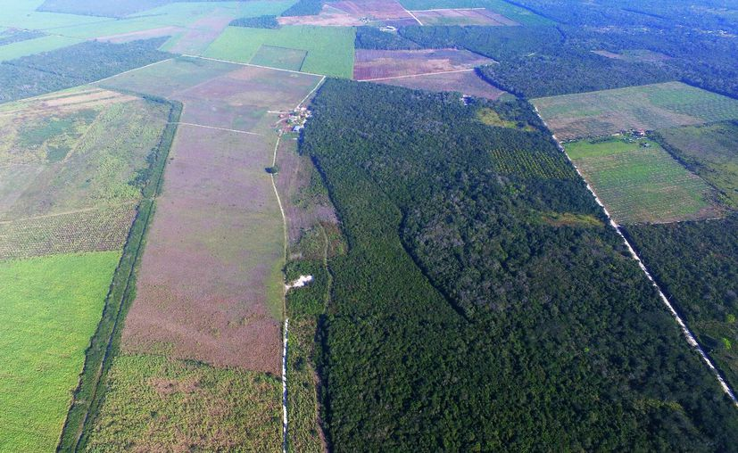 Ejidatarios de Xul Há denuncian que se pretende edificar viviendas en dos mil hectáreas, sin realizar ningún estudio ambiental. (Javier Ortiz/SIPSE)