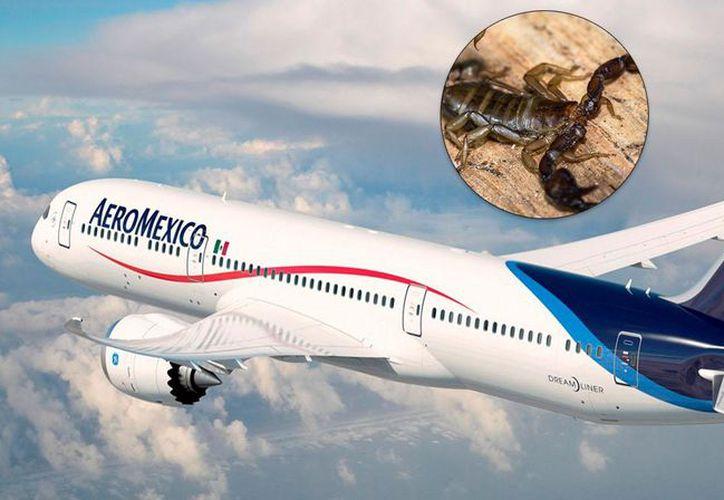 Un escorpión picó a una pasajera mientras volaba, por Aeroméxico, de la Ciudad de México a Chicago. (TN)