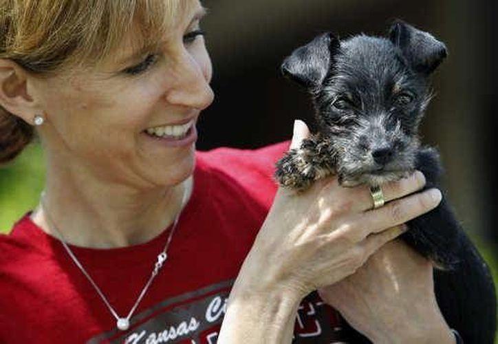 El cachorro de 12 semanas fue llevado a un refugio. (Agencias)